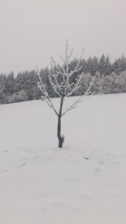 FOTKA - cesta z Kuklíku do Odrance a zpět  4