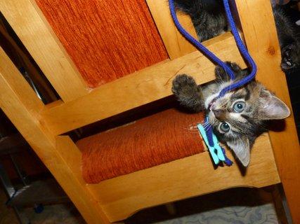 FOTKA - Ten kolíček je můj ...