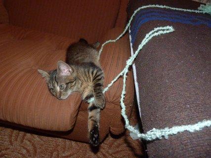 FOTKA - Už umím plést ...