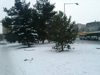 FOTKA - 27.1.2013.