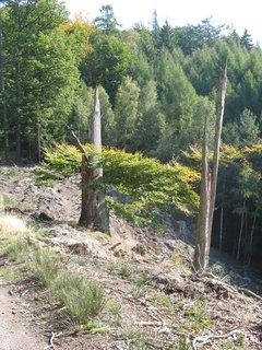 FOTKA - suché stromy v lese