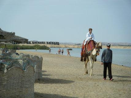 FOTKA - Pláž s velbloudem
