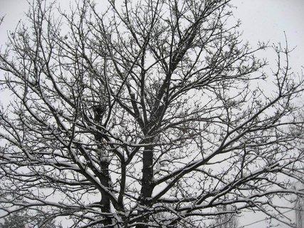 FOTKA - Zima na sídlišti 51