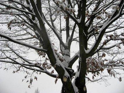 FOTKA - Zima na sídlišti 52