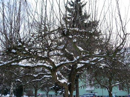 FOTKA - Zima na sídlišti 53