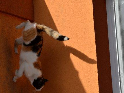 FOTKA - Lítací kočka :-) fotka není obrácená