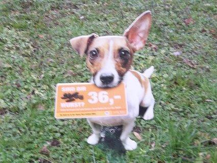 FOTKA - Vídeň - psíka nechat udělat potřebu venku se nevyplatí