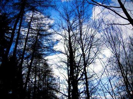 FOTKA - příroda*60