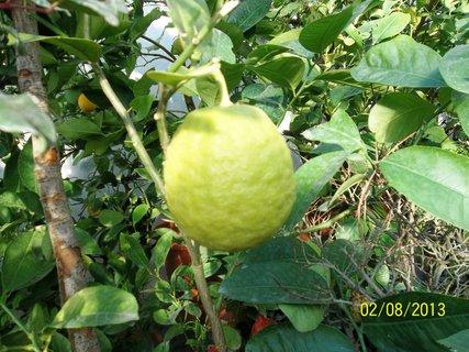 FOTKA - Rájec - Jestřebí -citrus
