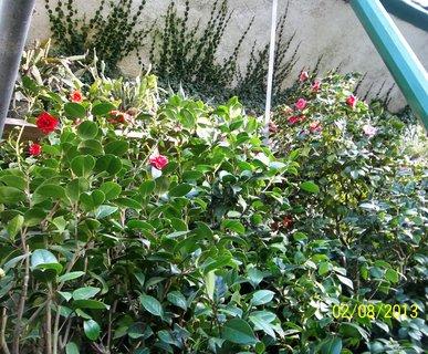 FOTKA - Rájec -Jestřebí,ve skleníku