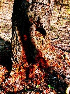 FOTKA - Kostičky z rozpadající se třešně
