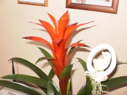 FOTKA - krásný květ nekvět :.-)