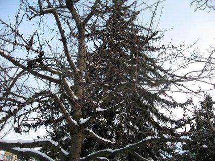 FOTKA - Zima na s�dli�ti 66