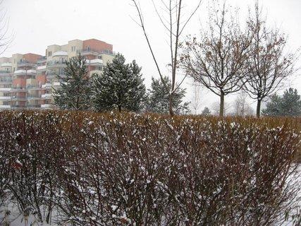 FOTKA - Zima na sídlišti 70