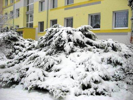FOTKA - Zima na sídlišti 73