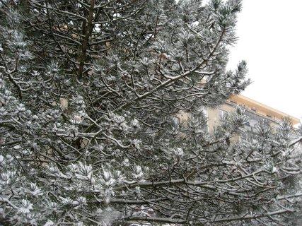 FOTKA - Zima na sídlišti 75
