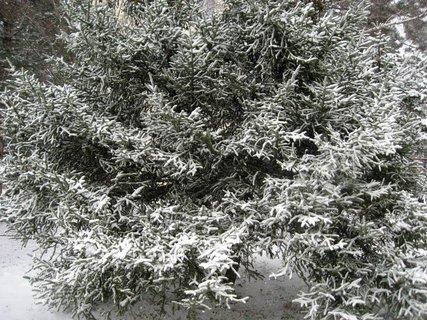 FOTKA - Zima na sídlišti 77