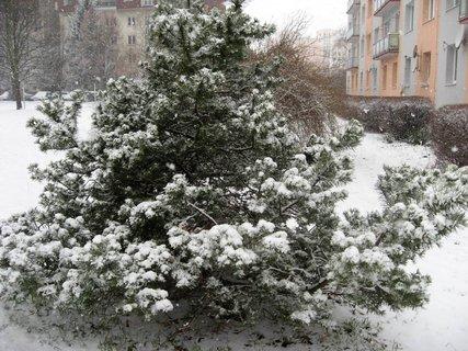 FOTKA - Zima na sídlišti 78
