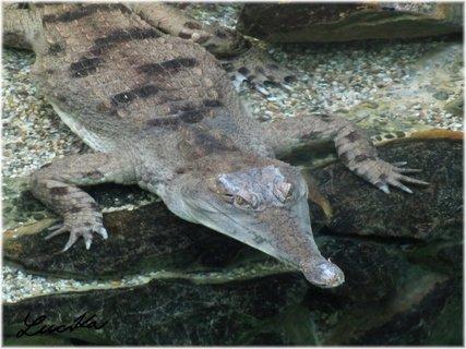 FOTKA - Detail krokodýla