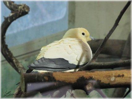 FOTKA - Ptáček