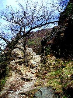 FOTKA - Cesta z kamena