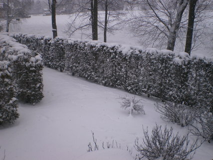 FOTKA - Pravá zima