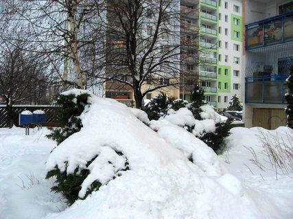 FOTKA - Ladovská zima