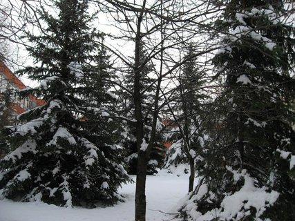 FOTKA - Ladovská zima 2