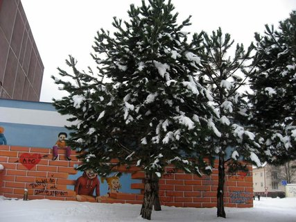 FOTKA - Ladovská zima 5