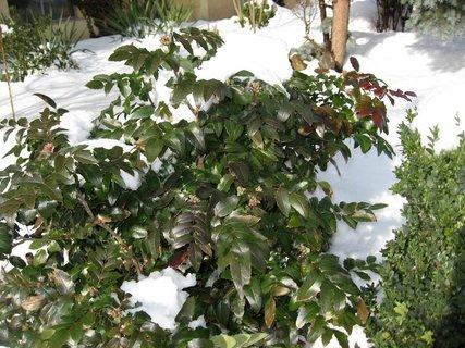FOTKA - Ladovská zima 20