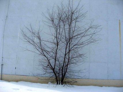 FOTKA - Ladovská zima 21