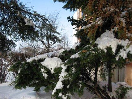 FOTKA - Ladovská zima 25