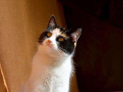 FOTKA - Zvědavá tříbarevka mladší