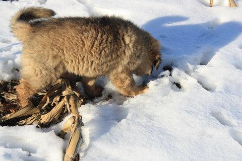 FOTKA - pod sněhem jsou myšky