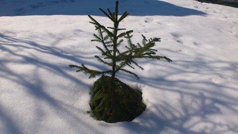 FOTKA - březen-sněhová nadílka