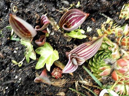 FOTKA - Tulipánky lezou!