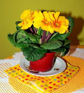 FOTKA - Jarní radost od Pegynky