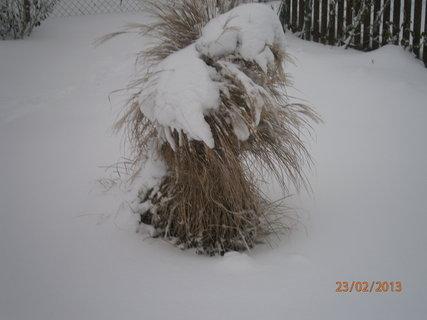 FOTKA - zasněžená tráva 1