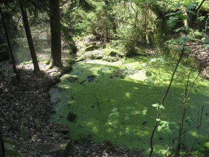 FOTKA - za mlhou hustou, že by se dala krájet, je rybníček Brčálník