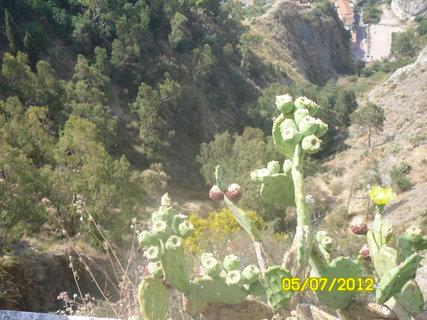 FOTKA - kvítka a kaktusy