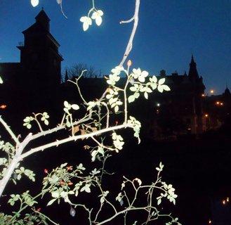 FOTKA - Podzimní večer.