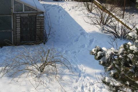 FOTKA - kupa sněhu  .