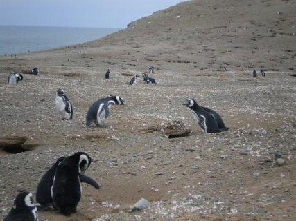 FOTKA - tučňáci, právě jsme svědky manželské hádky...