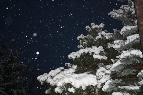 FOTKA - :((zima