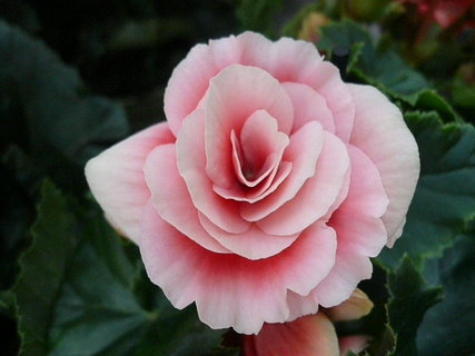 FOTKA - posílám Všem kytičku k prvnímu jarnímu dni
