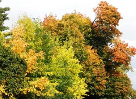 FOTKA - *Podzimní barvy