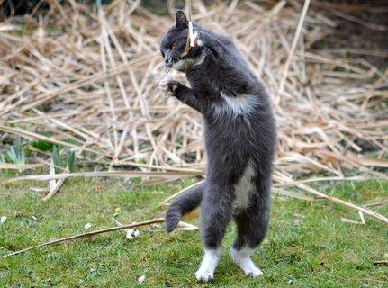 FOTKA - Tančící Gandalf