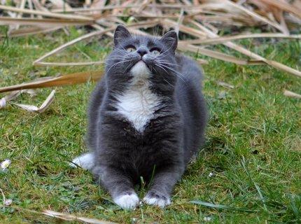 FOTKA - Žeby mi spadla do tlamičky nějaká myška?:-))
