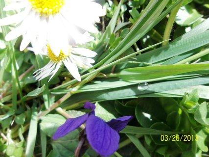 FOTKA - na trávníku .
