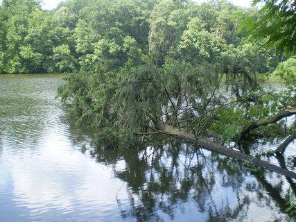 FOTKA - Konopiště, zlomený strom